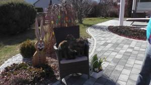 Der N-Wurf von der Siegerstrasse mit fast 6 Wochen wünscht allen ein Frohes Osterfest