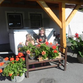 Blumenbilder bei uns Zuhause 26.07.2018
