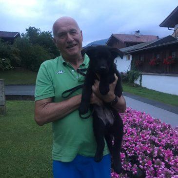 Letzter Welpe ist ausgezogen,wir wünschen Peter Foidl samt Fam, mit ihrem Olaf von der Siegerstrasse   , viel viel Erfolg und Gesundheit.Ich bin stolz so einen Hundeführer in meiner Zuchtstätte von der Siegerstrasse zuhaben. – Olaf geht nach   Kössen  wo sein Vater  Yukon vom Gsiberger Besitzer Michael Bertignol ist.