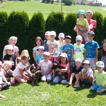 Kindergarten St.Georgen ob Judenburg zu Besuch beim Züchter Deutscher Schäferhunde von der Siegerstrasse am 04.07.2019