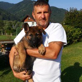 1 Welpe ist ausgezogen,wir wünschen Thomas Loitelsberger mit seinem Olymp von der Siegerstrasse viel viel Erfolg und Gesundheit.Ich bin stolz so einen Hundeführer in meiner Zuchtstätte von der Siegerstrasse zuhaben.